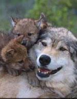 Icon-wolfmom150