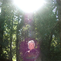 Pix-zredwoods250