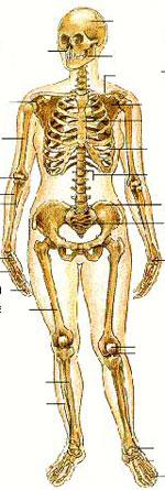 Pix-bones150