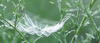 Pix-spdrweb150