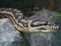 513033_snake