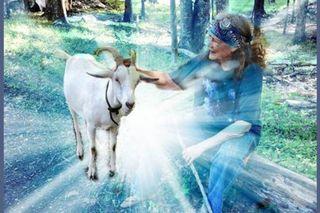 Susun-goat