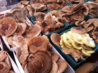 Mushrooms9-20